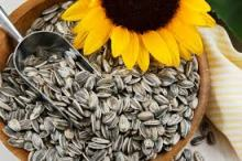 semilla girasol